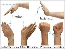 Actions of the wrist